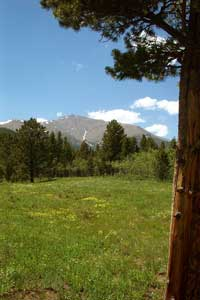 Fowler Cabin meadow